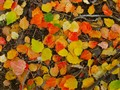 Confetti Leaves