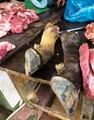 Meat shop in Sapa, North Vietnam.