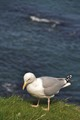 Sea + Gull = Seagull.