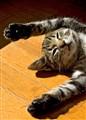 Relaxing_kitten