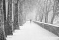Paris, Cyclist in the Snow