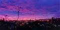 Purple Sunset Da Lat