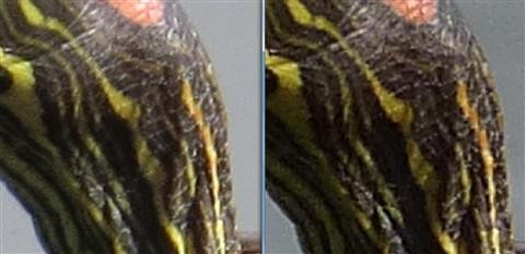 LTZ470 Samples - SX50 Fine vs FZ200 + Nikon TC - Turttles - Detail comparison 05