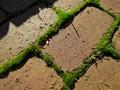 Moss Between the Bricks