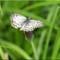 Butterflies_P7022649