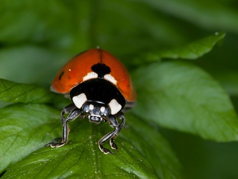 Bugs2013-1LR4sm
