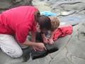 Finding starfish, sea anemones, baby shrimps...