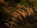 grass in august