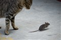 Cat & Mouse Game