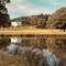 Gerrard_landscape_goldlightertree_fg_fixed_sml