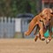 Sighthound practice 2014-04-26
