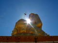 Buddha and Pigeon