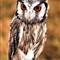 owlDSC_0469