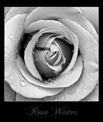 Dundonald Roses 01 border