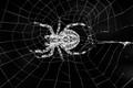 Mono Web