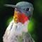 G10 Birds