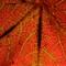 Leaf Back
