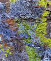 Lichen on Rhyolite