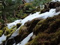 Snow and Moss
