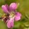 Bee at Ashland