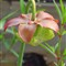 5862-Flora-ACR-WEBResize