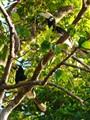 toucan pair