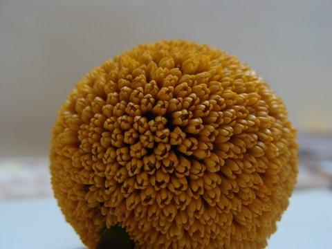 Yelllow Spherical Flower