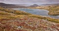 Arctic tundra fall colors, Northern Nunavik