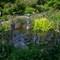 ABG Little Fountain #2 (1 of 1)