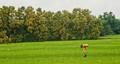 Man & Nature-Brics-4-India-A male cultivator,