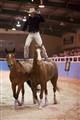 Roman Riding