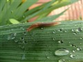 Green, slug and rain