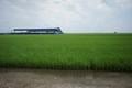 -Field of Green-