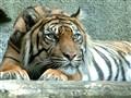 London Zoo 2003
