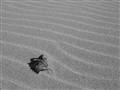 Automn leave & Sand