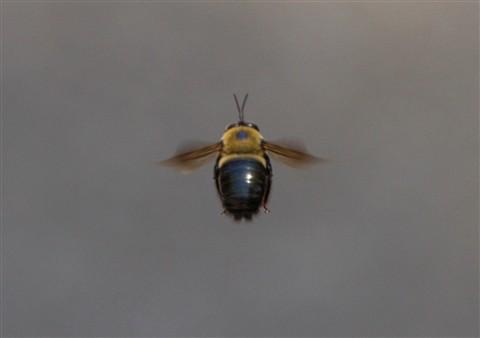 Mailbox Bee IMG_3216