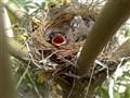 Lil' Birdy