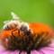 1407 bee (28 of 33)