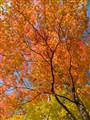 20081013-16c-ArboretumAutumn-WEB