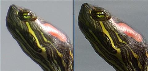 LTZ470 Samples - SX50 Fine vs FZ200 + Nikon TC - Turttles - Detail comparison 01