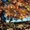 November landscape at our condo