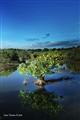 Reflejos Arbol Humedal de Nigua