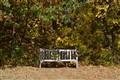 bench impression