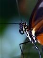 Six Butterfly