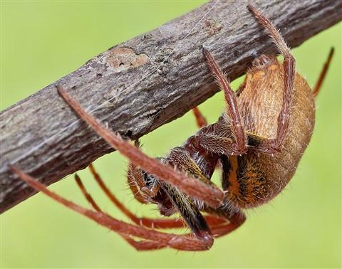 spider 03crop