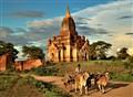Oxcart near Bagan,  Myanmar