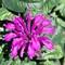 Purple_butterfly Flower-12x12 copy