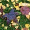 leaves_ginko