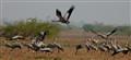 cranes raring to Go..!!