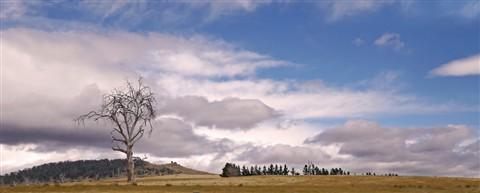 Australian Landscape, TAS